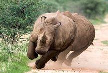 Rhino / by Janet Oculi