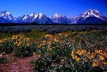 Tetons/Yellowstone / by Amy Gardner