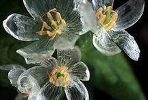 Amazing Plants / Unusual and rare flowers and foliage.