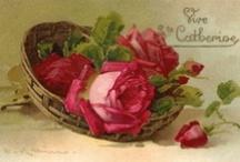 Cartes Sainte Catherine