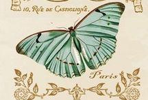 ♥ les Papillons