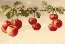 Vintage illustrations... Fruits