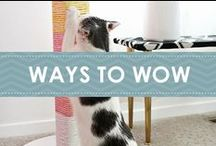 Ways to Wow / As cat lovers, we're always looking for the latest and greatest ways to wow our favorite felines. Whether it's a delightful DIY project, or a delicious dish of her favorite Broths with Chicken, we have some suggestions here that will be sure to… well, wow! Try a sample on us at WowServedDaily.com.  / by Fancy Feast