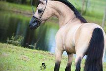 Horses / by Margit F. Reiter