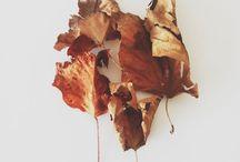 falling in fall.