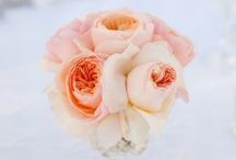 Perfectly Peach! / by Emily Lau Donovan