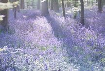 colour :: lavender