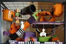 RATS / DIY cage, toys, ideas / Idées de maisons, bricolages, friandises (etc.) pour les rats.