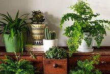 Green / Verdure