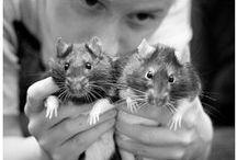 RATS / rats & people
