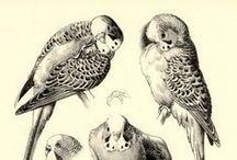 ART / Animals anatomy ref