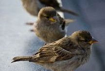 BIRDS / Others