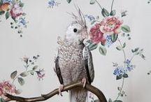 BIRDS / Cockatiels