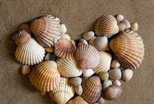 Shells / Schelpen