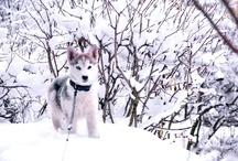 my dog:)