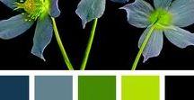 Culori si inspiratii