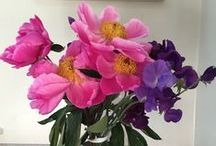Peonies / My favourite flower - so fleeting yet so fabulous!