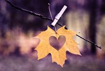 AUTUMN♡ / Let's F A L L in love!