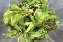 Grünes / Alles über das Gute aus der Natur und dem Grünen, Green Smoothies, wilde Kräuter, Tees und was mich von innen und außen mit Sauerstoff, Gesundheit und Chlorophyll füllt!