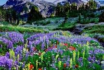 Great Oregon Nature Photos