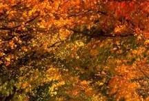 Fall / by Grace Vine