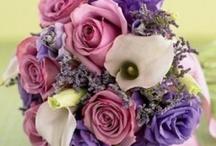 Pink-Purples-Lilac
