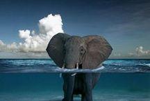Elephants  / by holly hambrick