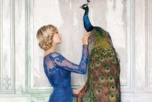 Peacock fever / Just bcuz a love peacocks!!!