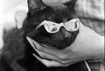 cats with glasses / katte met glase