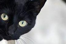 swart katte (opgedra aan poepoe, beer en bababek) / i love (black) cats ......