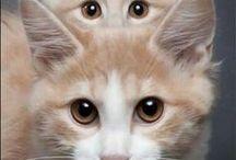 bonnie se katliefde / cat love