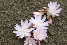 Nature Night: Central Oregon Wildflowers / Deschutes Land Trust's March Nature Night features photographer and field guide author Mark Turner. Join us for stunning photography and an armchair tour of native flowers on March 19, 2014.