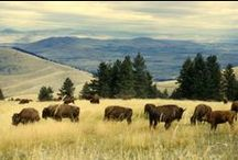 Farm & Ranch Lifestyle / The area boasts expansive properties that take full advantage of the beautiful Western and Northwestern Montana landscape. From Whitefish Hills Estates to Rock Creek Cattle Company, we represent a wide range of farm and ranch properties throughout the state.