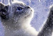 Katter! / Katter i alla varianter.