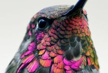 Bird Beauty