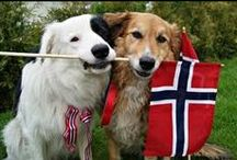 Norge /  Norway / Mitt lille land..... / by Sol