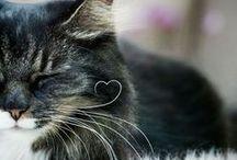 Alles für die Katz...