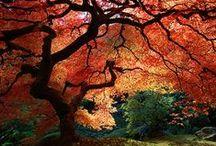 bunte Blätter, weiße Kürbisse / wenn die Blätter fallen....