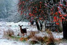 ★ Winter / Winter