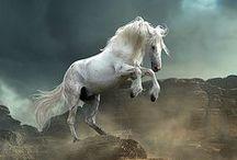 N: Cavalli Leoni e altri