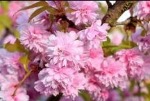 Natur Fotografie / photography fotografie pictures nature makro tree flower