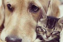 Just plain cute / Who doesn't love cute animal photos?