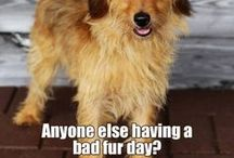 Fur inspiration