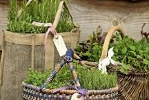 Gardening Tips & Savings / Money saving tips to get your garden ready for Spring without breaking the budget