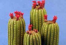 CACTUS Y SUCULENTAS / Disfrutar creando plantas