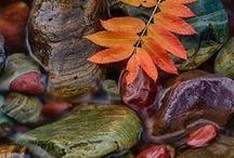 ~Autumn~ / ~ Wind ~ Rain ~ Cozy ~ Warm