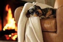 ~Cozy~