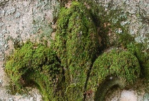 ~Moss~