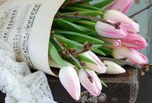 ~Flowers Tulips~
