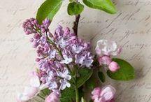 ~Flowers Lilacs~